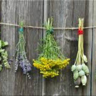 consacrare le erbe