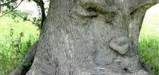 toccare legno, legno sacro